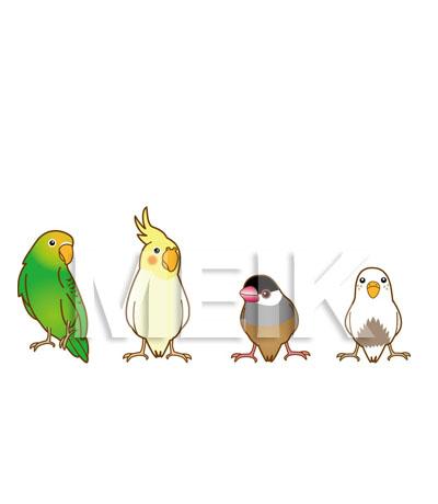 小鳥イラスト(セキセイインコ ... : 縮小図 : すべての講義